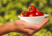 likopen pomidory